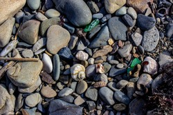 The sea shore after a storm. Seaweed and wooden fragments were thrown on the rocky beach. Broken and whole shells. Rapana. Textured rocky sea background.