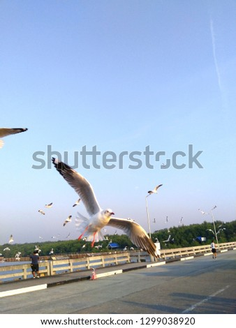The seagull flies gracefully