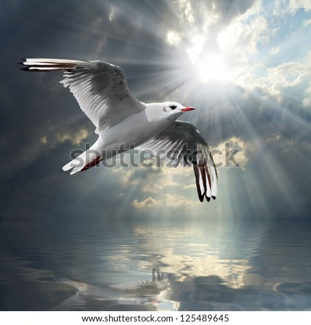 The Seagull flying over a sea against a dramatic sky. Background from nature.