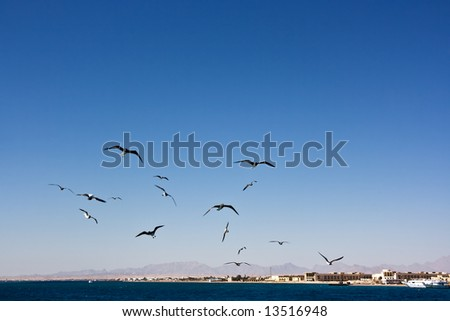 The seagull in the sky over The Red Sea