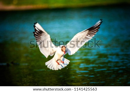 the seagull is flying over the river #1141425563