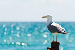 The seagull sits on a white fence. Wings of a bird