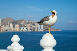 The seagull sits on a white fence. Wings of a bird. The exposed beak of a bird. Sea bird.