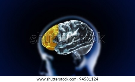 the section of brain for medical and biology concept