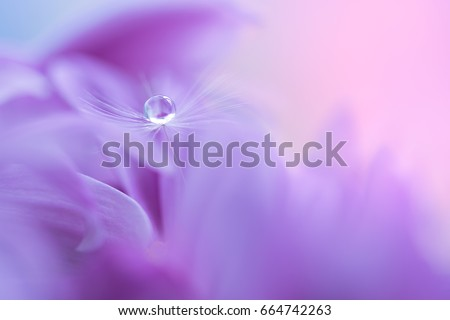 Stock Photo The seed of a dandelion with water drop on purple flower. Macro dandelions on a beautiful background. Selective soft focus