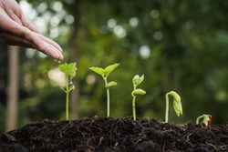 the seedling are growing from the rich soil to the morning sunlight that is shining, hand watering young plants In growing. plant growth evolution from seed to sapling, ecology concept.