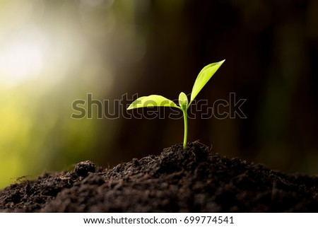 The seedling are growing in the soil, ecology concept. #699774541