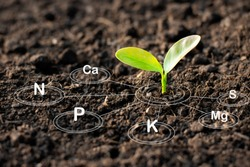 The seedlings are growing from the rich soil and have an icon attached to the nutrients necessary for plant growth.