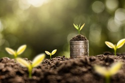 The seedlings are growing on coins that are stacked on fertile soil.