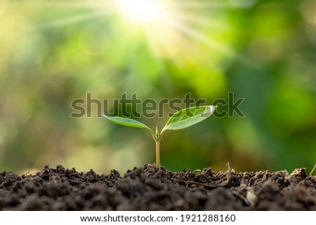The seedlings grow from fertile soil and the morning sun shines. Ecology and ecological balance concept.