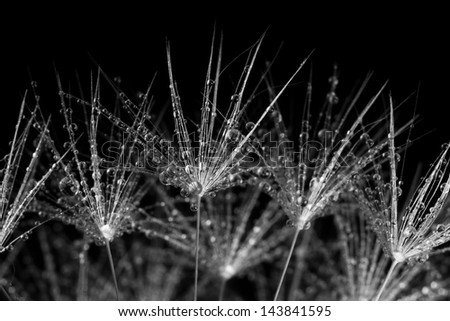 The seeds of new life. Macro. Abstract photo.