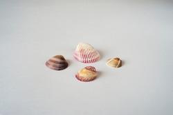 The set of  four small seashells