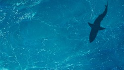 The shadow of a large shark underwater. Top view of the ocean