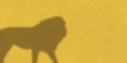 The shadow of a lion on the background of a yellow wall. Background texture