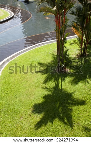 Stock Photo The shadow of the palms on the green grass. Park.