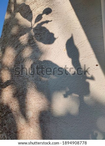 The shadow of tree leaves on ghe wall Imagine de stoc ©