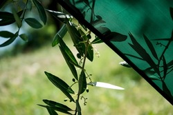 The shadows and silhouettes of leaves and branches on green fabric from a parasol.