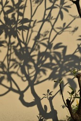The shadows of branches and leaves of a tree on the wall. Out of focus, abstract blur bright back ground.