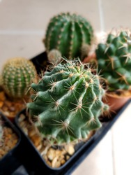 The sharp thorns of the cactus