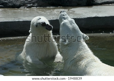 The she-bear and the bear cub play to water