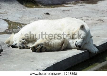 The she-bear and the bear cub sleep