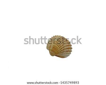 The shell is an external protective skeletal formation covering the body of some invertebrates and microorganisms. #1435749893
