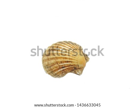 The shell is an external protective skeletal formation covering the body of some invertebrates and microorganisms. #1436633045