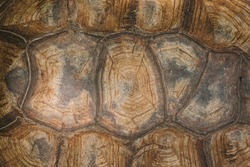 The shell of a giant turtle, close-up. Background texture and carapace pattern. Turtle shell texture details.