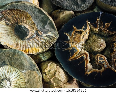 The shell of an ancient shell fossilized in a stone rock. Spiral shell from the shell