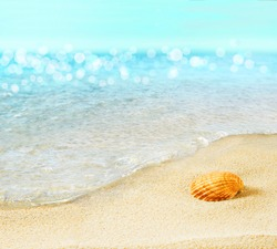The shell on the seashore.