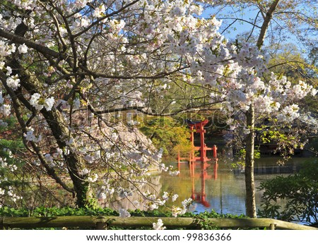 The Shinto shrine seen amongst the blossoms at the Japanese Hill-and-Pond Garden at the Brooklyn Botanic Gardens on a sunny Spring morning.