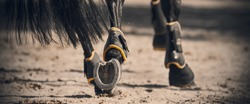 The shod hooves of a black horse, with a glossy long tail galloping across the sandy arena in the sunlight.