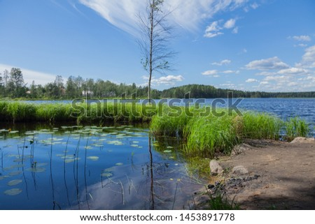 The shore and creek of the lake with a lonely birch on the border of water and land. Summer day #1453891778
