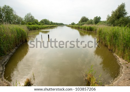 The shore of a canal in spring
