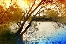The shore of the pond, the trees over the water, fallen leaves and bright sunlight. Landscape of a forest or park with a river or a lake