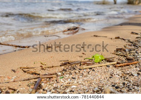 the shoreline: smooth, clean sand washed by waves of fresh-water lakes with clear water, branches, leaves and algae made the water on the shore #781440844