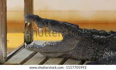 the side of an alligators mouth open. this is a good picture to use for anything that should scare people!