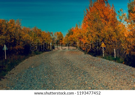 The side of the country road was covered with small deciduous forest #1193477452
