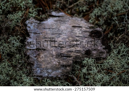 The sign on the forest texture. Birch bark in the moss. North moss and bark. Texture for the label. Ecological theme. Hunting. Hike. Fishing. Camping goods store. Restaurant hunting cuisine.