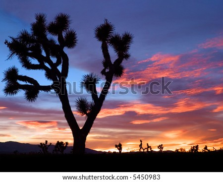 The silhouette of a Joshua tree at sunset in California's Mojave desert.