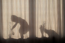 The silhouette of a little girl watering a flower on the windowsill and the silhouette of a cat looking at a girl through a flower on the windowsill on the curtains on a bright Sunny day.