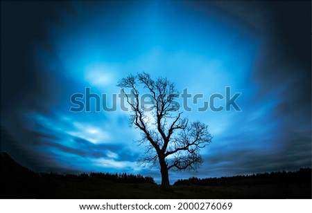 The silhouette of a lonely tree in the darkness of the blue night. Lonely tree in evening. Dark blue sky lonely tree.
