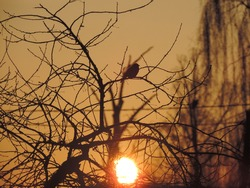 The silhouette of a tree and a bird at sunset. Yellow and orange sunset colors