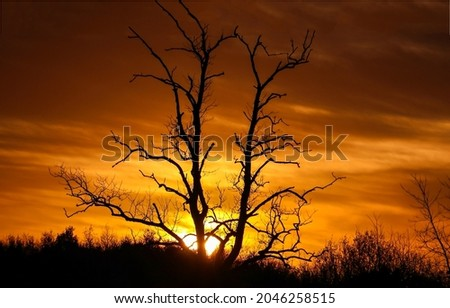 The silhouette of a tree at sunset. Sunset tree branches. Sunset tree silhouette. Tree at sunset