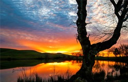 The silhouette of a tree by the lake at sunset. Lake at sunset. Sunset lake view. Lake tree at sunset