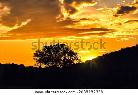 The silhouette of a tree on the slope at sunset. Sunset trees landscape. Orange sunset. Beautiful sunset landscape