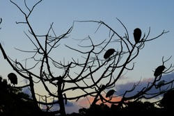 The silhouette of Osprey and Egret birds perched on top of a leafless tree against blue sky in the winter of Taiwan.