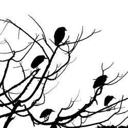 The silhouette of Osprey and Egret birds perched on top of a leafless tree on white background.