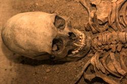 the skeleton of a man. anthropology, ancient history. archaeological excavations.