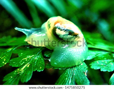 the skeleton snail is wetting